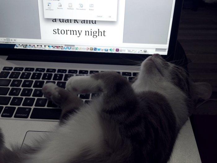 Katinas ant klaviatūros